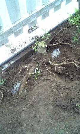 暗渠排水工事中に木の根っこにぶち当たる・・